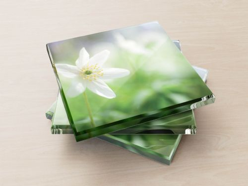 Wood Anemone - Glass Coasters